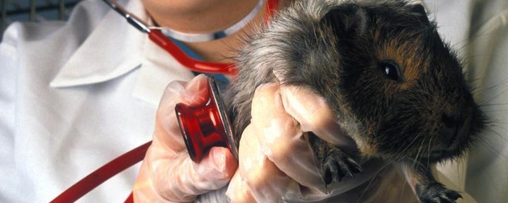 Ветеринар ратолог